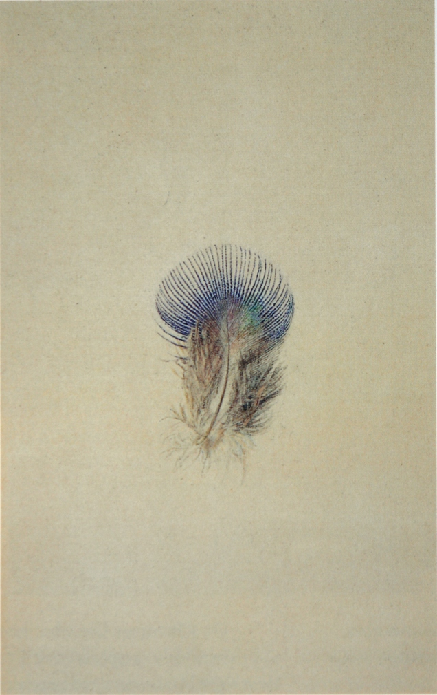 Study_of_a_Peacock's_Breast_Feather